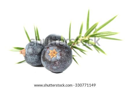 Juniperus berries juniper leaves - stock photo