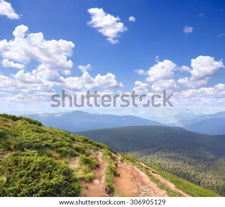 Juniperus sibirica near mountain road. Carpathian mountains. Ukraine - stock photo