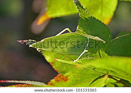 Just a Leaf - stock photo