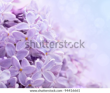 Just blooming lilac flowers. Abstract background. Macro photo. - stock photo