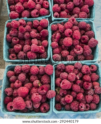 Just harvested raspberries in boxes at farm market. - stock photo
