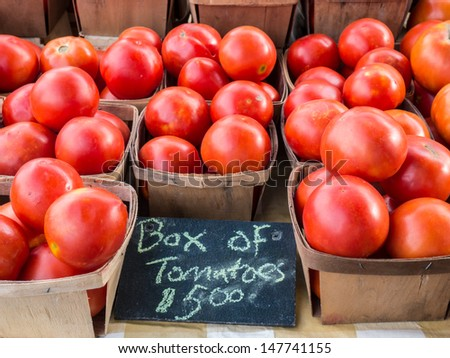 Just harvested tomatoes for sale at local farm market. - stock photo