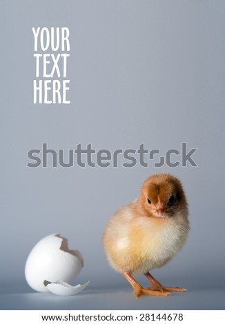 Just hatched - stock photo