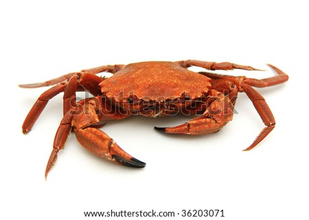 just one single boiled crab on isolated background - stock photo