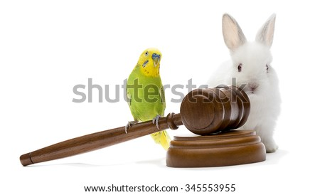Justice for Animals - stock photo
