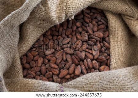Jute bag full with cocoa beans   - stock photo