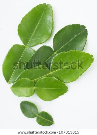 Kaffir lime leave on white background - stock photo