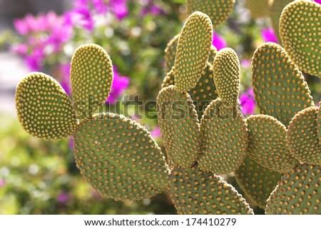 Kaktus - stock photo