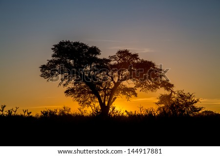 Kalahari sunset The sun setting behind a big camel thorn tree in the Kalahari - stock photo