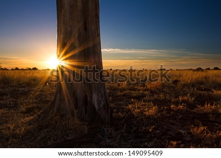 Kalahari sunset with trees grass and blue sky and sunburst - stock photo