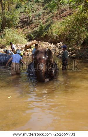 KALAW, BURMA - FEB 27, 2015 - Tourist helps wash an elephant,  Elephant conservation camp near Kalaw Myanmar (Burma) - stock photo