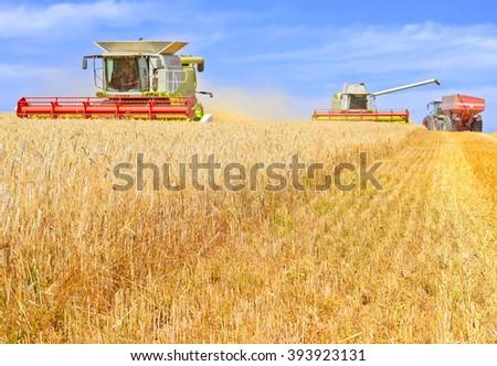 Kalush, Ukraine - August 4: Modern  combine harvesting grain in the field near the town Kalush, Western Ukraine August 4, 2015 - stock photo