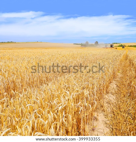 Kalush, Ukraine - August 4: Modern  combine harvesting grain in the field near the town Kalush, Western Ukraine August 4, 2015