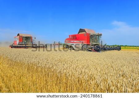 Kalush, Ukraine - August 10: Modern  combines harvesting grain in the field near the town Kalush, Western Ukraine August 10, 2014 - stock photo