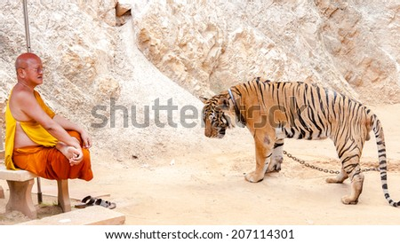 Kanchanaburi, Thailand - May 23, 2014:Unknown buddhist monk with a bengal tiger at the Tiger Temple  in Kanchanaburi, Thailand.The Temple was founded in 1994 as a sanctuary for wild animals. - stock photo