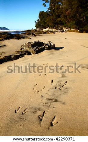 kangaroo footprint at ocean beach - stock photo