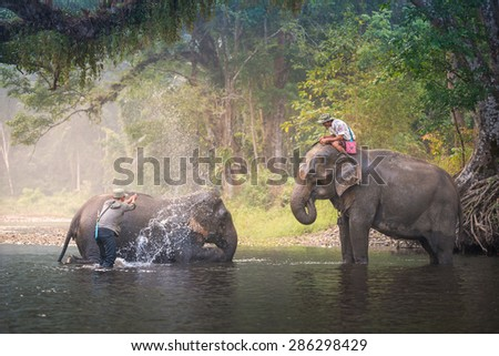 KANJANABURI, THAILAND-JANUARY 30 : An unidentified man shows playing with an elephant in a river in Sangkhlaburi, Kanjanaburi, Thailand on January 30, 2015 - stock photo