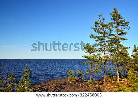Karelian landscape: pines on the rocks. Russia