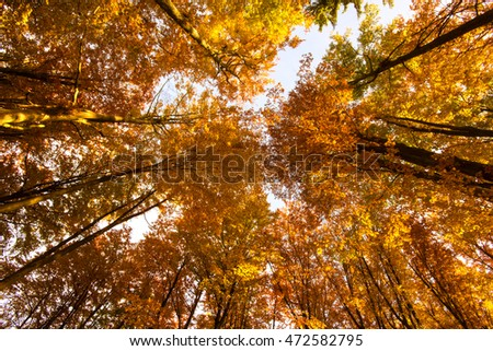 Kashubia, Poland./Autumn Forest