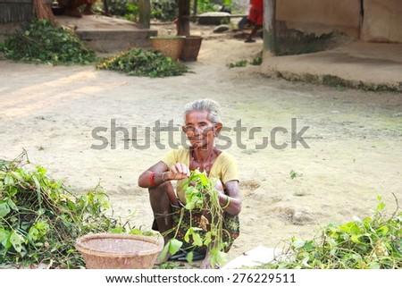 KATHMANDU,NEPAL-OCTOBER 13, 2012: Old woman working in field work on October 13,Nepal. - stock photo