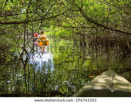 Kayaking in mangrove tunnels in Everglades National park, Florida, USA - stock photo