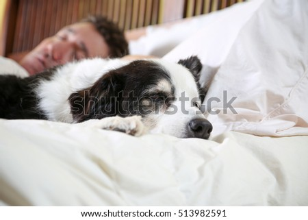 keeping his owner company on a sick day or sleeping in on the weekend, dogs like to stay close to their people