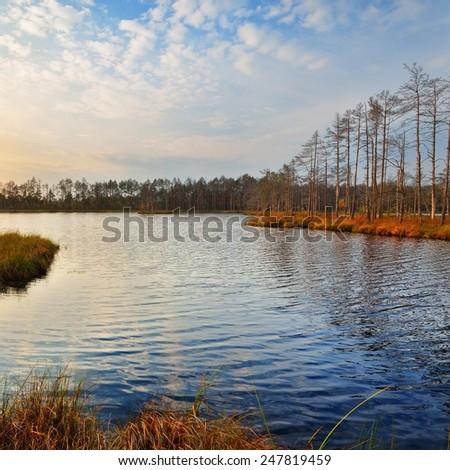 Kemeri Bog in Latvia. Forest swamp scene. - stock photo