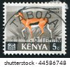 KENYA - CIRCA 1964: Animals. Thomson?s gazelle, circa 1964. - stock photo