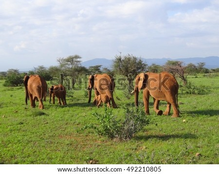 Kenya, Elephants