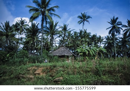 Kenya, Malindi, coconut trees and a typical kenyan house in the countryside near Malindi - stock photo
