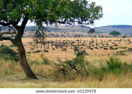 Kenya's Maasai Mara Animal Migration - stock photo