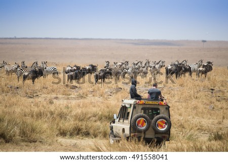 Maasai People Stock Images RoyaltyFree Images Vectors - Maasai tribe wild animals attend wedding kenya