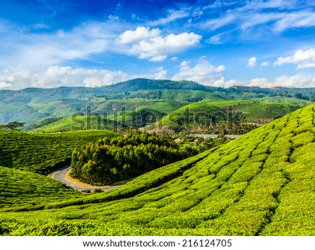 Kerala India travel background - green tea plantations in Munnar, Kerala, India - tourist attraction - stock photo