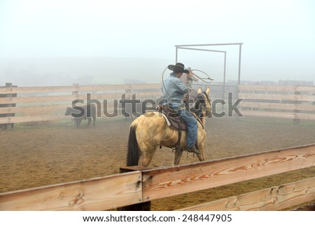 KERN COUNTY, CA - JANUARY 30, 2015: These California ranch hands put their riding and roping skills to good use during this roundup and calf branding operation in dense fog. - stock photo