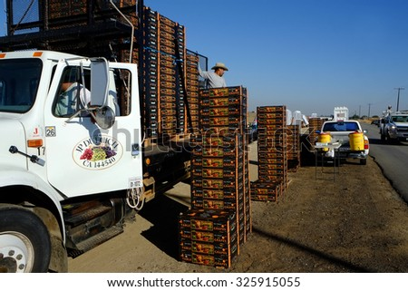 KERN COUNTY, CA -  OCTOBER 10, 2015: After packing table grapes in the field, farm workers load the boxes onto trucks for transporting to market. - stock photo