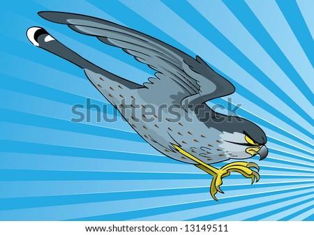 Kestrel swopping in dive - stock photo