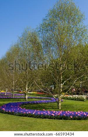 Keukenhof - Largest flower garden in Europe - Holland - stock photo
