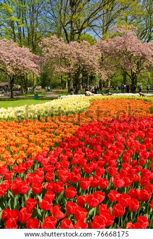 Keukenhof - Largest flower garden in Europe - Holland
