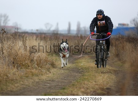 Kharkov, UKRAINE - November 15, 2014: Dmitriy Bashkatov during one dog Bikejoring Men's 3100 m at Sled dogs dry land race Autumn Cup - 2014 - stock photo