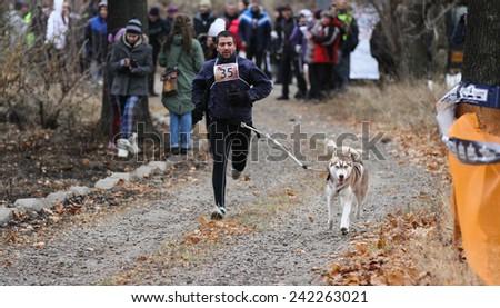 Kharkov, UKRAINE - November 15, 2014: Dmitriy Volkov at canicross heats during Men's 3100 m at Sled dogs dry land race Autumn Cup - 2014 - stock photo