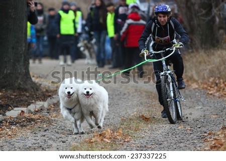 Kharkov, UKRAINE -?? November 15, 2014: Oleg Kostyuk at Bikejoring with two dogs Men's 3100 m at Sled dogs dry land race Autumn Cup - 2014 - stock photo