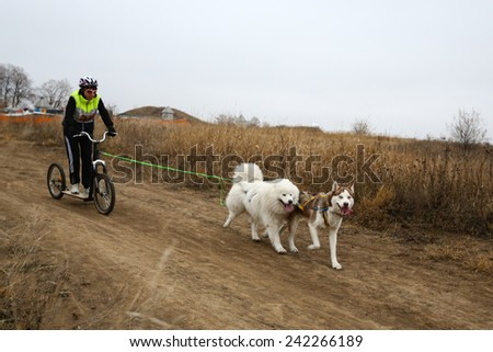 Kharkov, UKRAINE - November 15, 2014: Tatiana Yurchenko during Two Dogs Scootering Women's 3100 m at Sled dogs dry land race Autumn Cup 2014 - stock photo