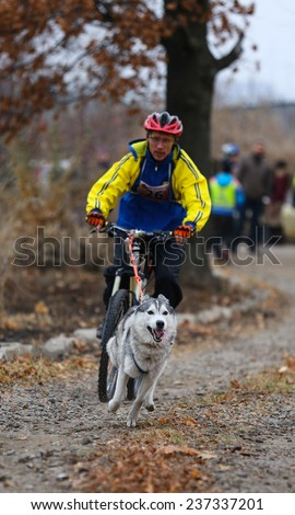 Kharkov, UKRAINE -November 15, 2014: Yuri Polyanichko during one dog Bikejoring Men's 3100 m at Sled dogs dry land race Autumn Cup - 2014 - stock photo