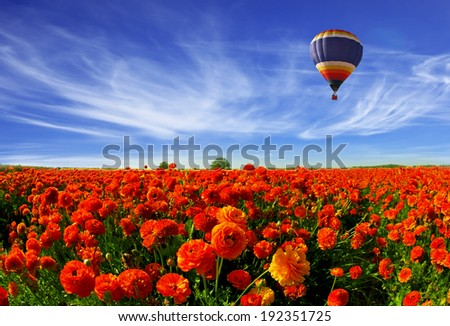 Kibbutz great field of bright red buttercups. In the cloudy multicolored sky - stock photo