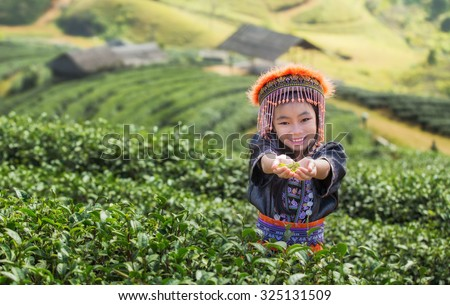 Kid and Green tea field in Angkhang, Chiang mai, Thailand - stock photo
