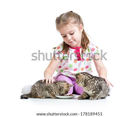 kid girl feeding cats kittens - stock photo