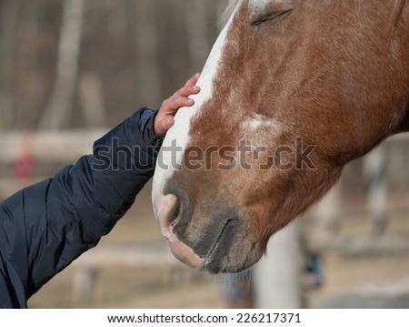 kid hand caressing horse close up - stock photo