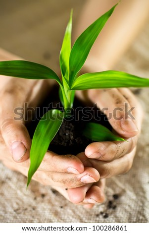 Kid hands holding sapling bamboo in soil