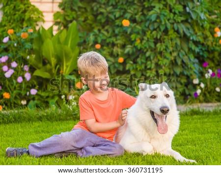Kid hugging White Swiss Shepherd dog together on green grass - stock photo
