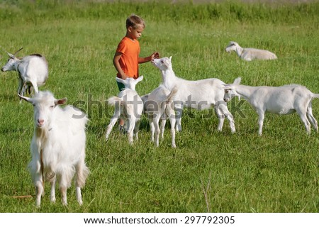 Kid playing with goats on  green meadow. - stock photo